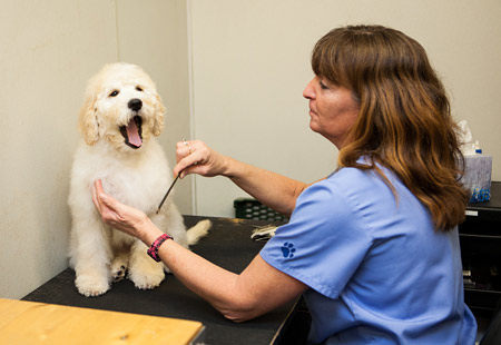 Pet Resort & Salon | Rose Rock Veterinary Hospital & Pet Resort